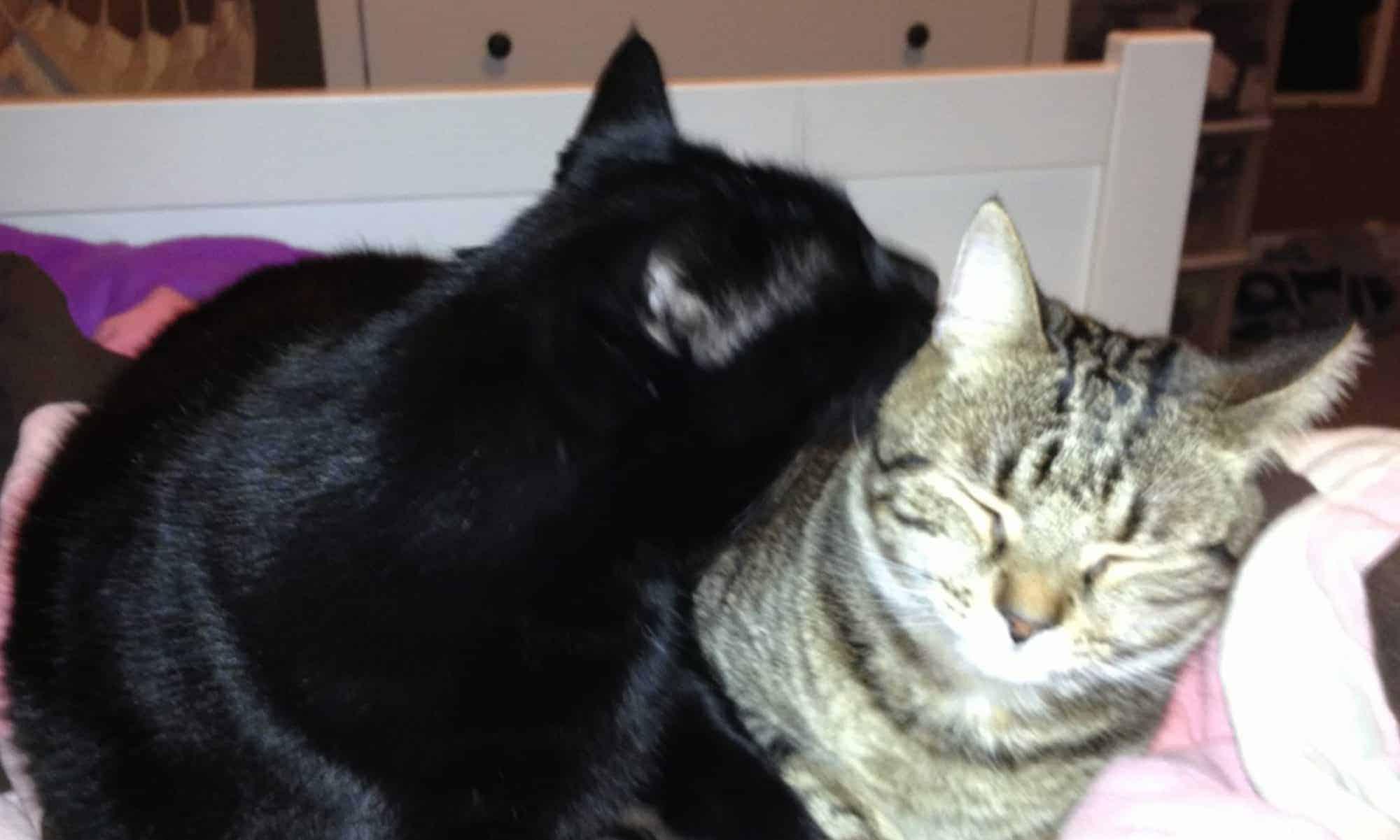 Otis and Mollie